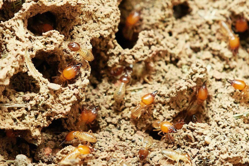 Termitas - Controlar plagas